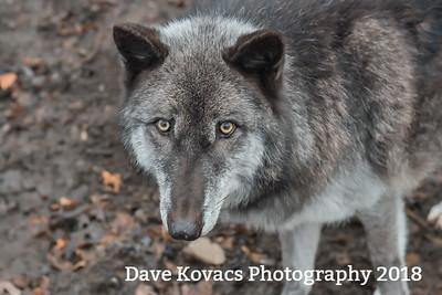 Lakota Wolf Preserve - Columbia NJ