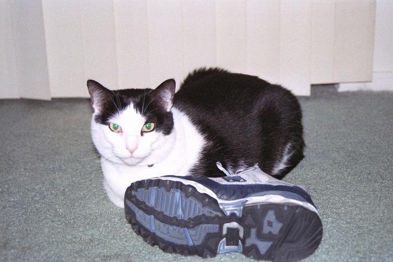 2003 12 - Cats 39.jpg