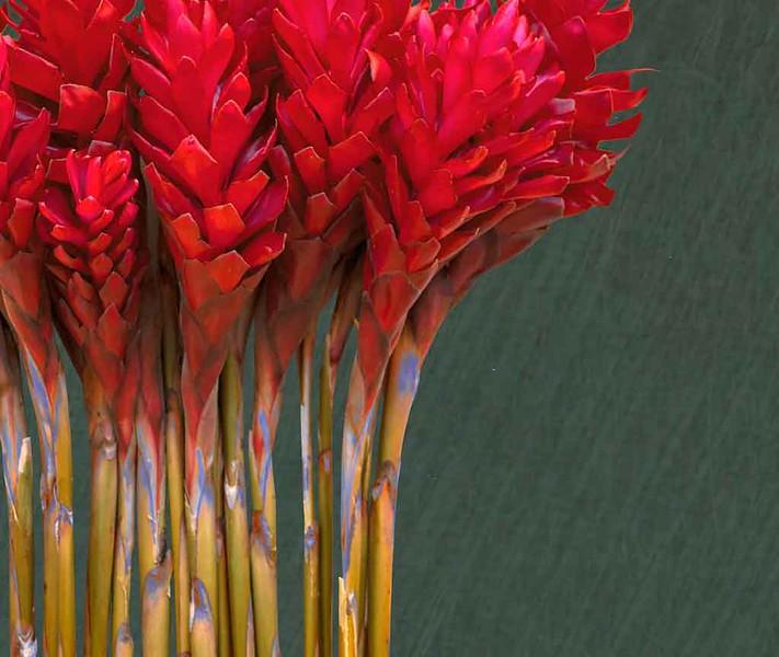 2019 Floser - red 1 book antherium flower p  p .jpg