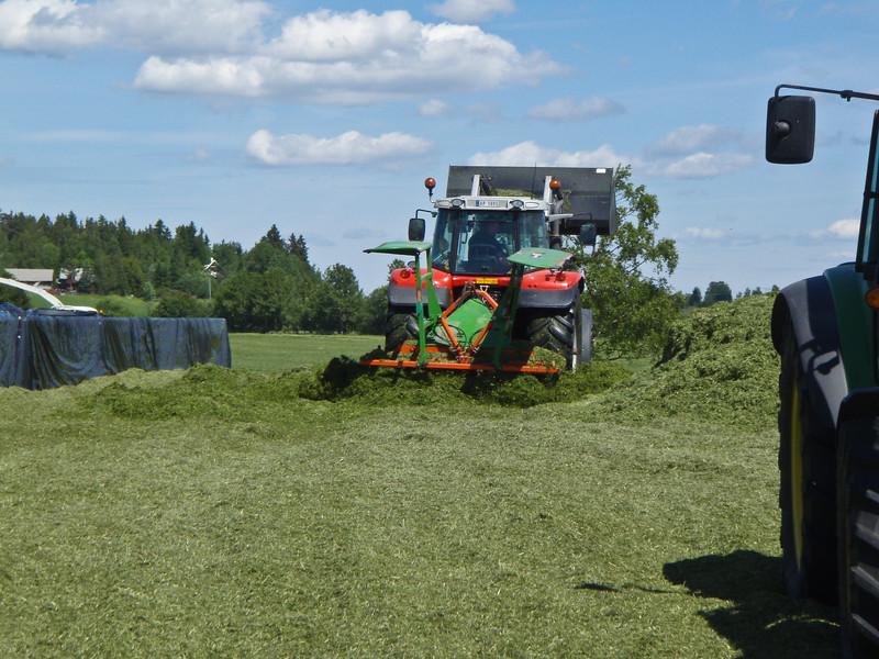 Grashøsting-46