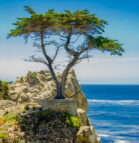 Lone Cypress Carmel-2.jpg