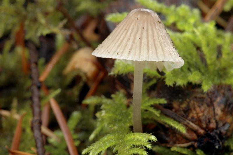 mushroomblackbug.jpg
