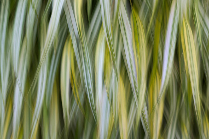 Downward Grasses