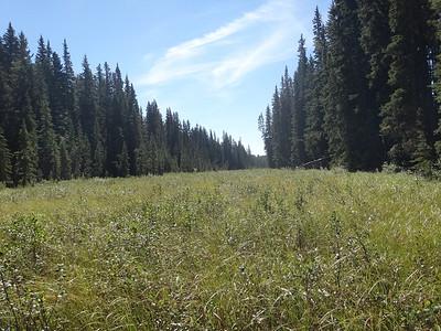 Aug 2013-Logging-around-wetlands-Ghostwatershed