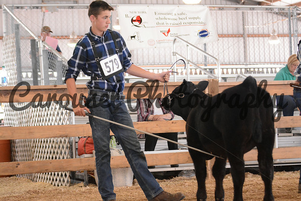 Limousin Show