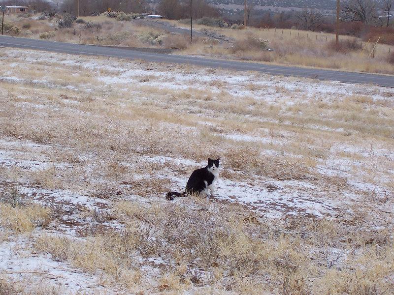 A winery cat.... Syrah.