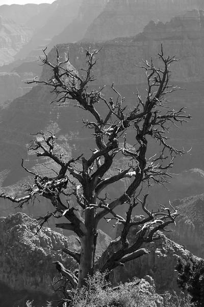 2017-03-21-Grand-Canyon-852.jpg