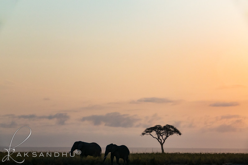 SunInAfrica-025.jpg