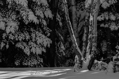 Snow and Shadows (Black and White)