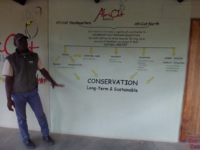 Conservation work at Africat Okonjima, Namibia