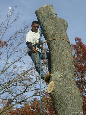 Tree Removal, Toms River, NJ