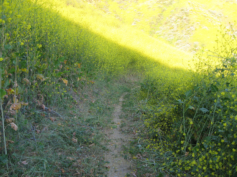 20080417008-New Millenium Trail, trailwork.JPG