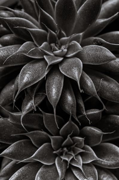 succulent 111219-7030.jpg