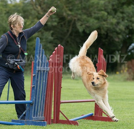 Evening Agility with Claudia 4th August 2017