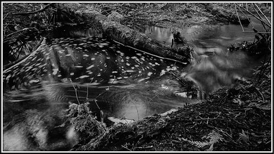 Musqueem Creek Set#1