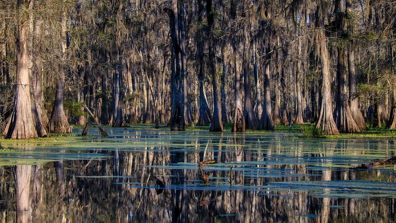 Lake Martin, La. T6i, 18-200 lens, 172A-small.jpg