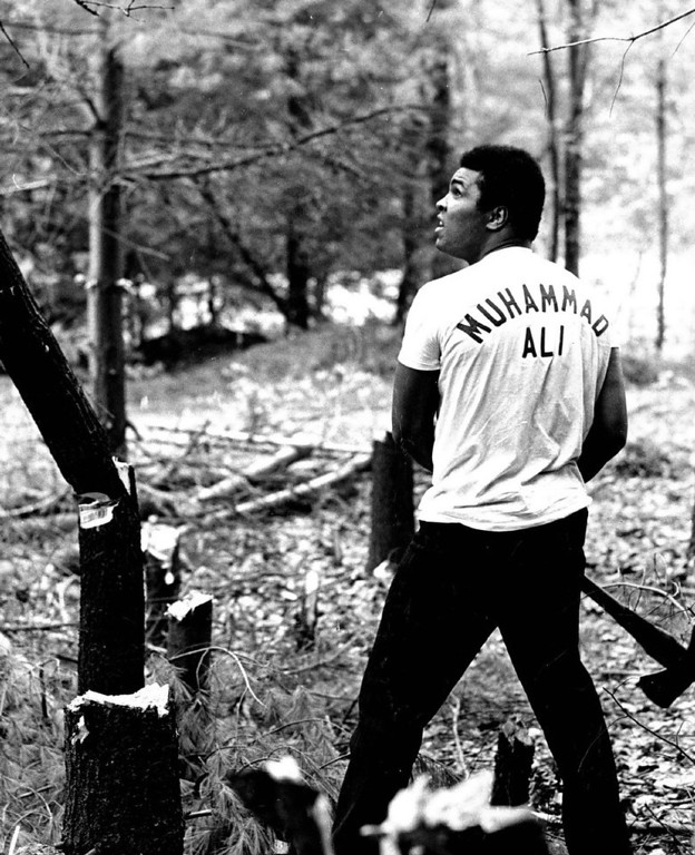 . Muhammad Ali Often chops down as many trees as he can in 15 minutes. 1972. Credit: The Denver Post