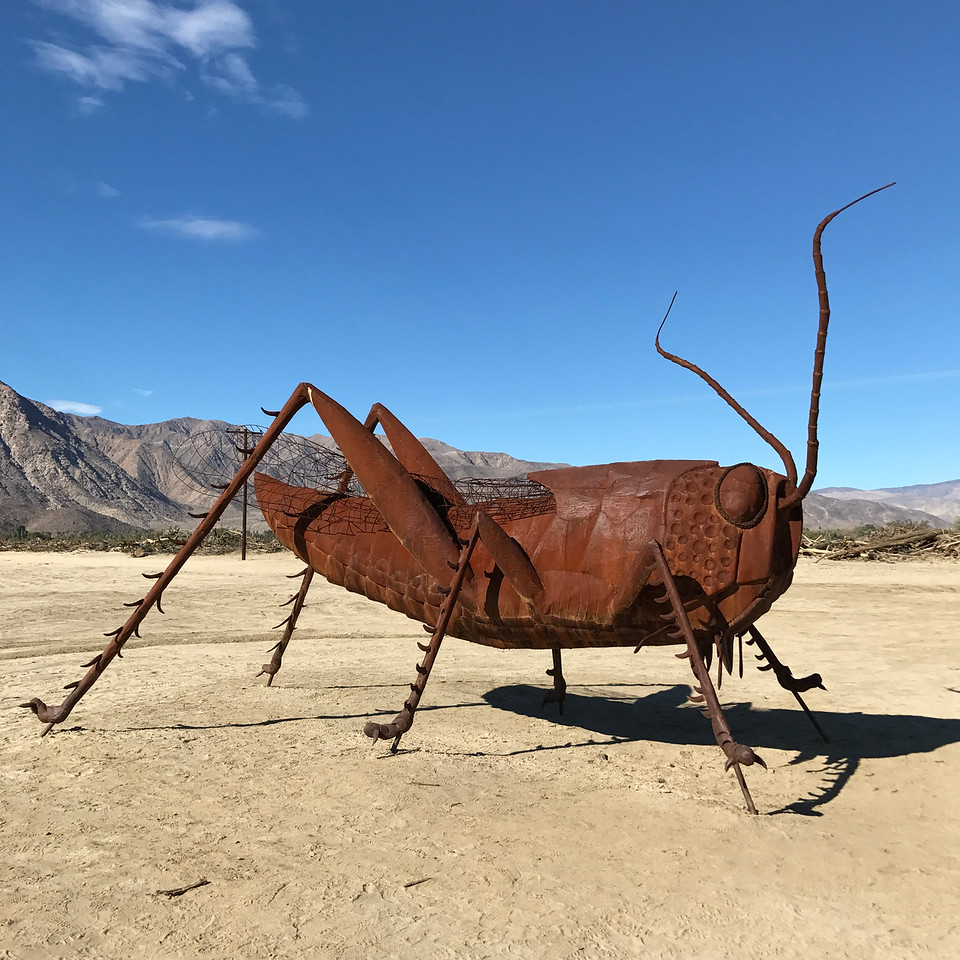 Anza-Borrego Desert - Giant Grasshopper