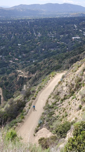 20190412081-Mt. Wilson Toll Road.jpg
