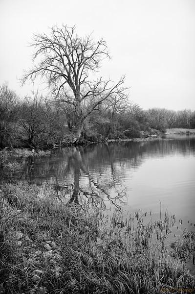 Lake Limbs