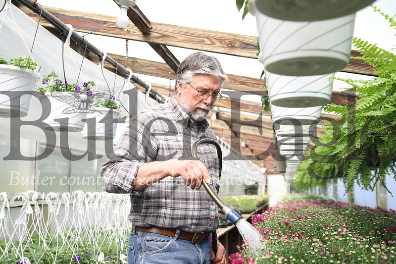 Jim Schnur, owner of Schnur's Greenhouse in Butler waters some mums Thursday. Schnur said with area churches closed through easter week, he's had a number of canceled flower orders in what would otherwise be a busy spring season.  04/02/20. Seb Foltz/Butler Eagle