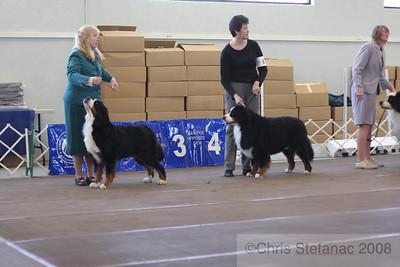 Sweeps Veteran Dog 7-9yrs-PV 09