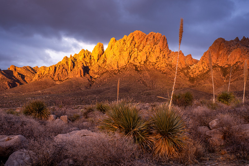 Organ Mountains #1