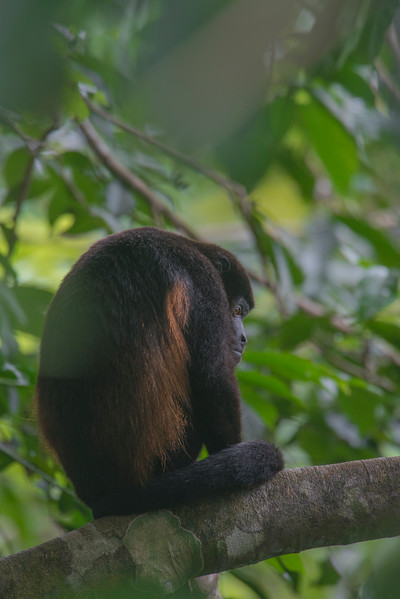 MonkeyDRM_0628.jpg
