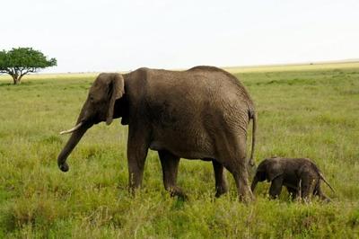1494239970African-Safari-17.jpg