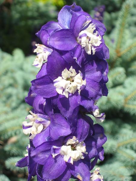 Les fleurs dans le Jardine du Canada