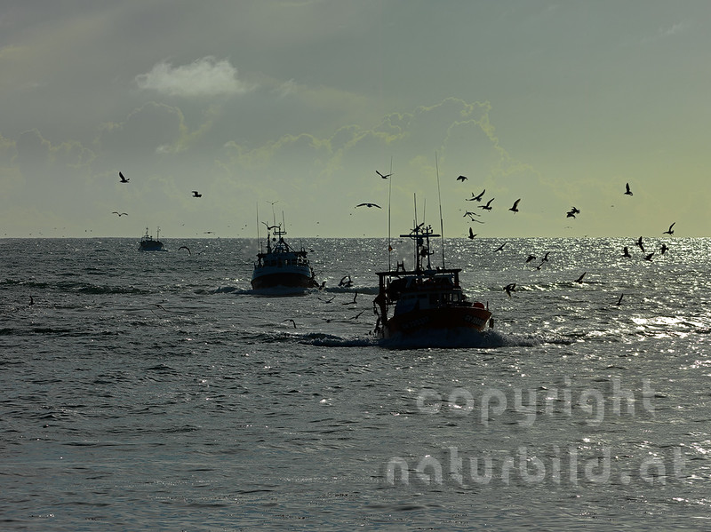 16B-05-202 - Heimkehr der Fischkutter