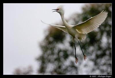 Baylands Preserve - Take 3