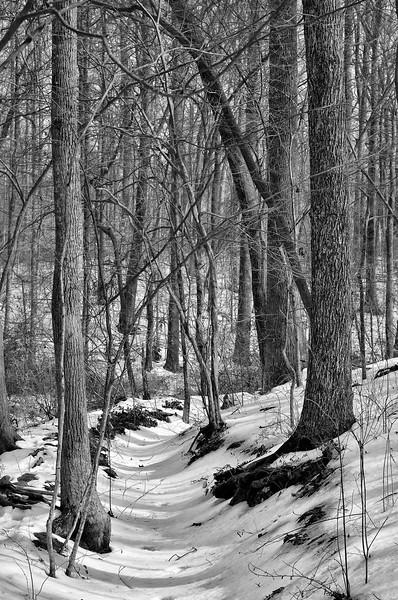 Reynolda Gardens in February Snow