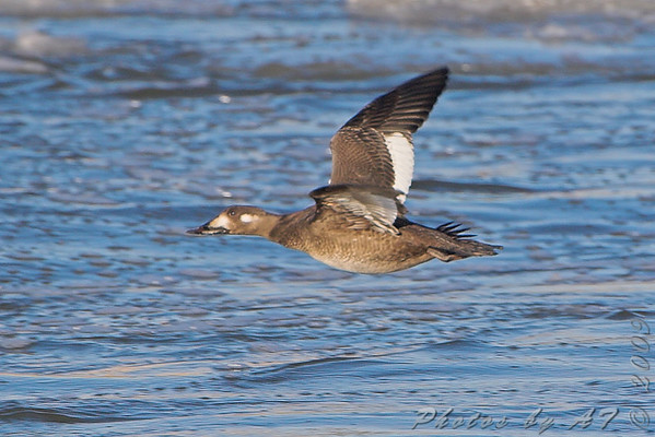 2009-02-02 Riverlands Migratory Bird Sanctuary