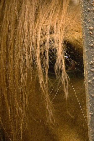 Horses West of Boston 1208