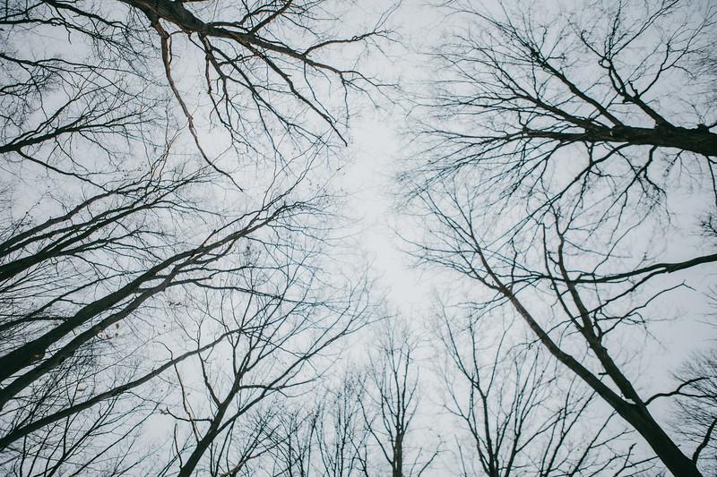 AVS_EcoPreserve_Winter2021-19.jpg