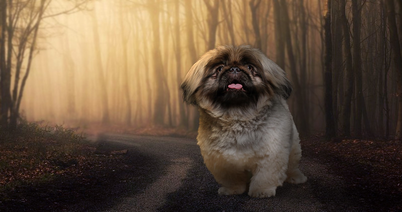 Dogy-zz.jpg