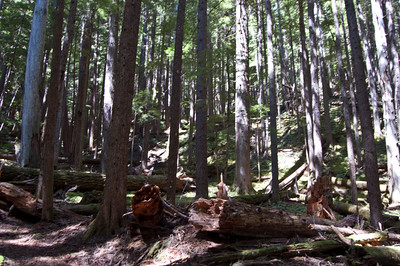 Upper Dungeness Trail 2012-05-26