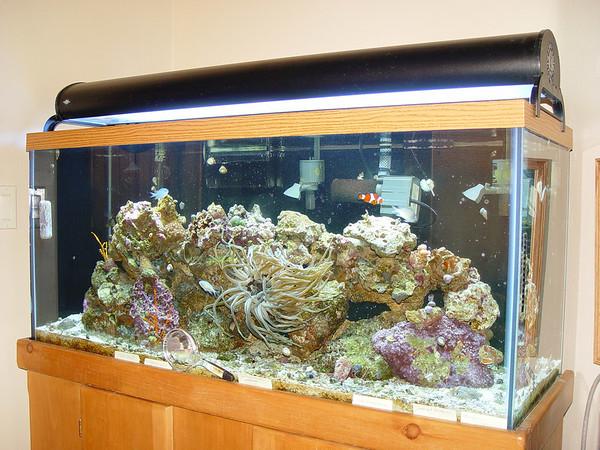 John O'Neal Aquarium - 2006