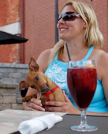20150722 - Dog Dining (MA)