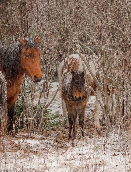 33 Nov 24 Foal and Mare  (1 of 1).jpg