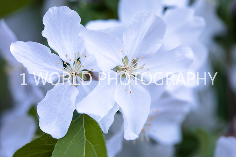 Cantigny Spring '17-534-45.jpg