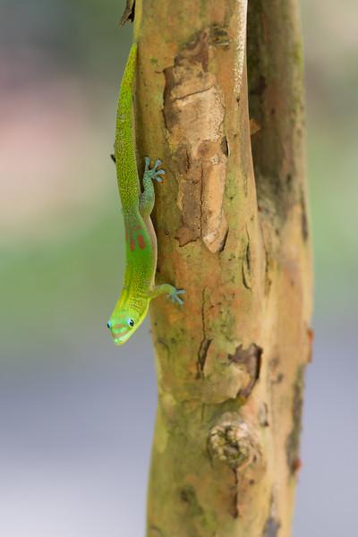Gecko Fun
