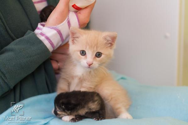 Un-Named Donner Kittens