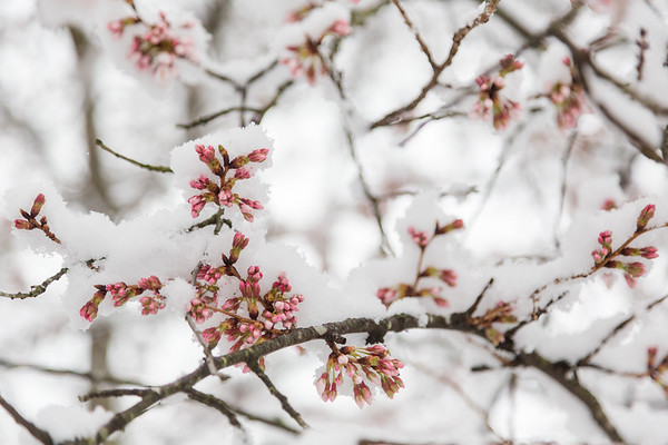 Spring Snow (2018-03-21)