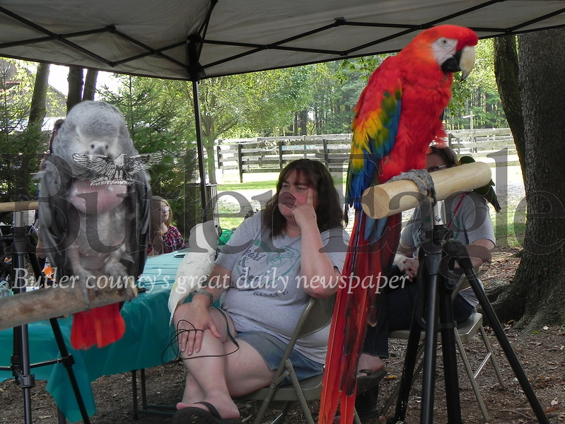 Merlin perches on the arm of Sherry Johnson, of  West Mifflin's Heart & Soul Parrot Rescue, while parrots Sixx (left) and Spirit (right) sit on their perches.