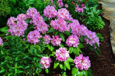 05-04-2020 Springtime Flowers