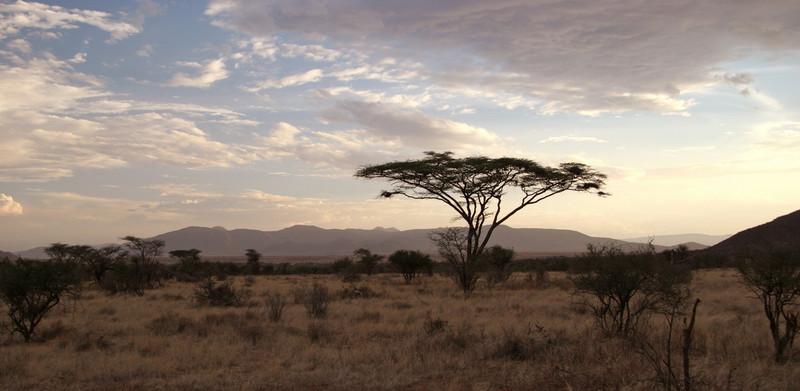 Samburu evening