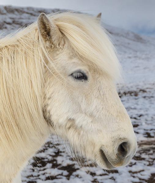 I am not a Pony_John Hoffman.jpg
