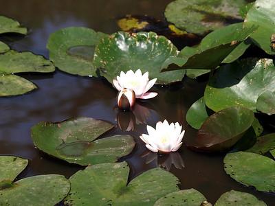 Savill Gardens (2009-08-08)